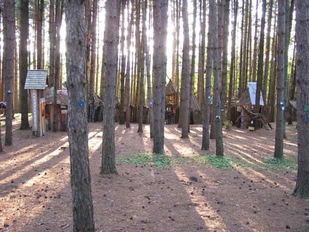 o pine