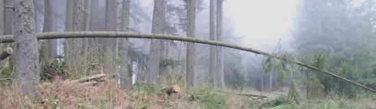 2006, Brownsmead, Oregon.